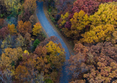 Осенние фото 2017 лес
