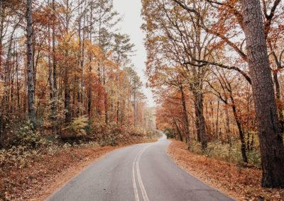 Осенние фото 2017 листья дорога