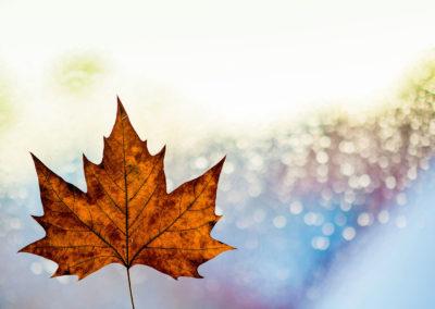 Осенние фото 2017 листья