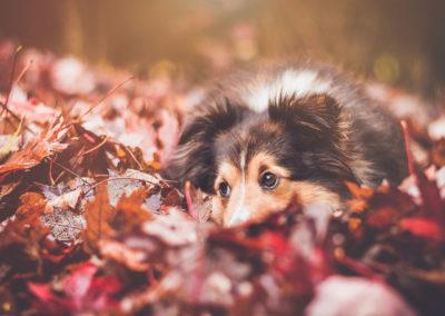 Осенние фото 2017 листья собака