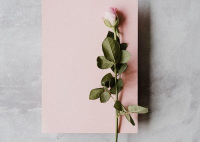 день Святого Валентина фото роза цветы