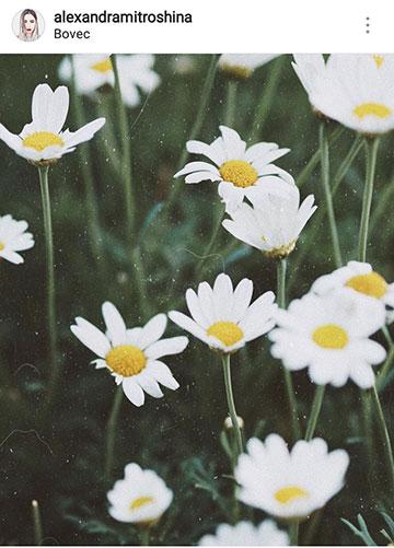 идеи для фото летом цветы в деревне