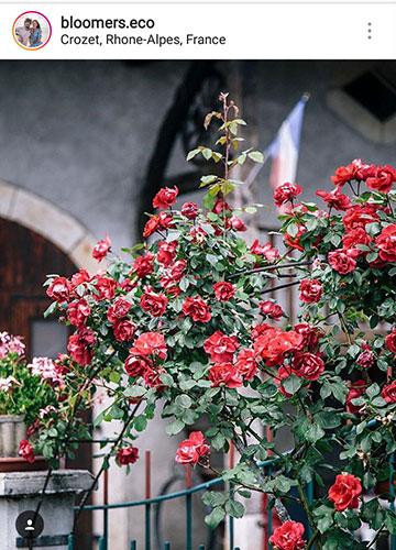 идеи для фото летом цветы
