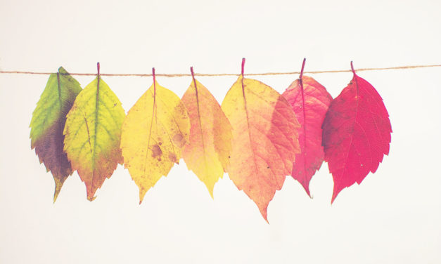 Идеи постов осенью для блогеров