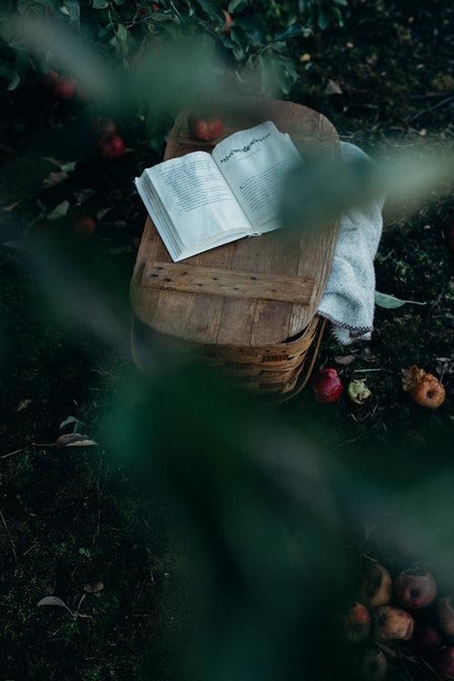 идеи фото осенью для инстаграм - книга на пикнике