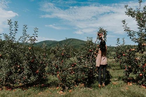 идеи фото осенью для инстаграм - девушка собирает яблоки